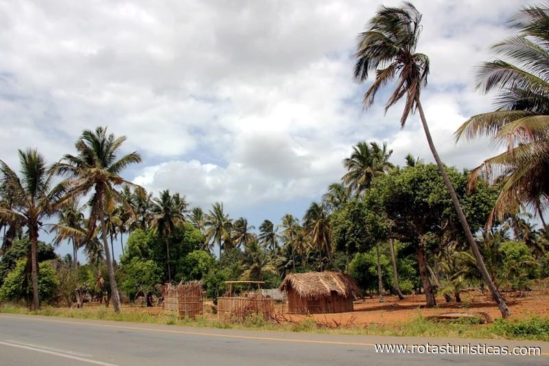 Paisagens de Moambique Entre Maxixe e Mapinhane Morrumbene