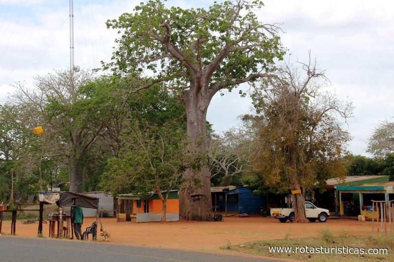 Paisagens da Estrada Entre Maxixe e Mapinhane Massinga Mozambique