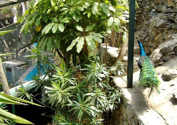 Parque ornitol gico bot nico loro sexi almu car espa a for Jardin botanico granada precio
